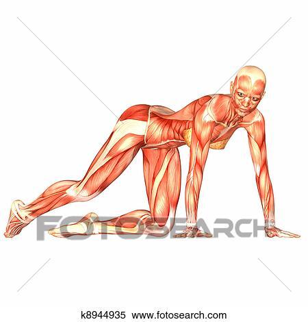 Stock Illustration Of Female Body Anatomy K8944935 Search Clipart