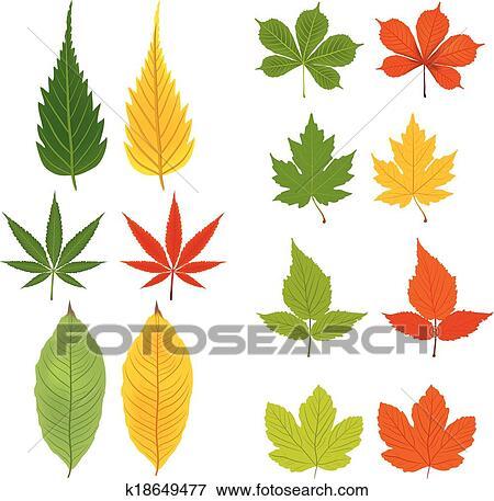 剪贴画 - 秋季树叶, 绿色, 同时,, 黄色图片