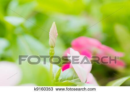 Dessin bourgeon fleur k9160353 recherchez des cliparts - Dessin bourgeon ...