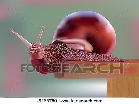 剪贴画 - 蜗牛