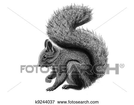 Stock Illustration of squirrel k9244037 - Search EPS ...