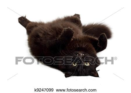 Soft Cat Food >> Clip Art of Cat Lying On Its Back – Cliparts