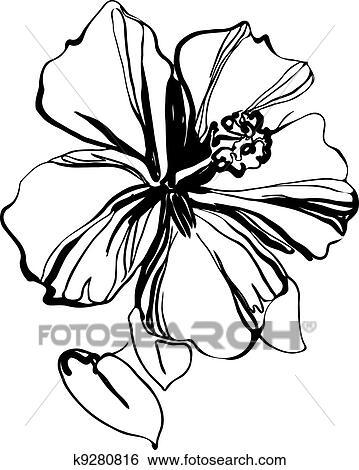Clipart hibiscus k9280816 recherchez des cliparts des illustrations des dessins et des - Dessin hibiscus ...