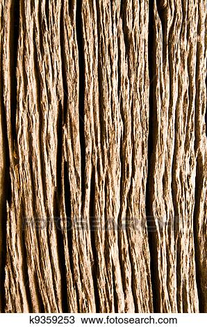 Stock Photo - Tree bark texture. Fotosearch - Search Stock Images ...: www.fotosearch.com/CSP935/k9359253