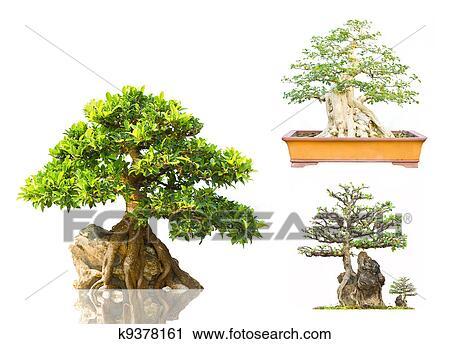 Banco de fotograf as japon s rbol hoja perenne bonsai for Ver fotos de arboles de hoja perenne