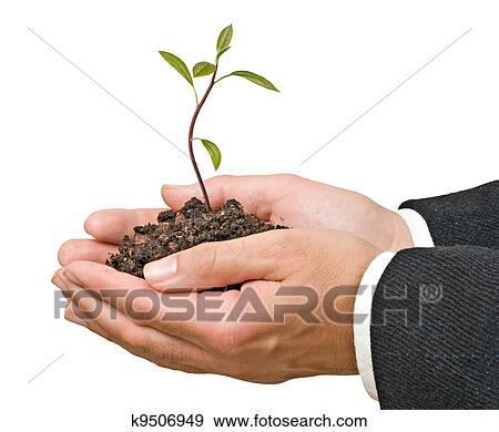 banque de photographies avocat arbre dans mains comme a cadeau de agriculture k9506949. Black Bedroom Furniture Sets. Home Design Ideas