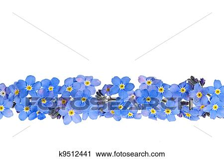 Stock photography of blue spring flower border k9512441 search arrangement of blue forget me not flowers isolated on white background mightylinksfo