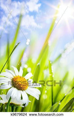 stock foto nat rlich summer hintergrund mit g nsebl mchen blumen in gras k9679624. Black Bedroom Furniture Sets. Home Design Ideas