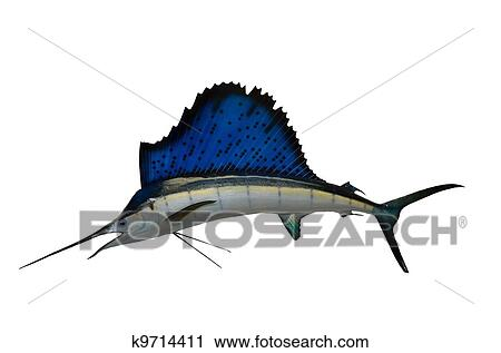 stock photography of sailfish mount k9714411 search stock photos rh fotosearch com sailfish clipart Sailfish OS