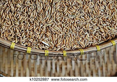 图片- 水稻. fotosearch - 搜索影像,照片,拓印,图像及照片剪贴画