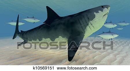 Clipart grand requin blanc k10569151 recherchez des clip arts des illustrations des - Dessin de grand requin blanc ...