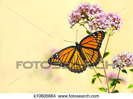 Stock Photo Of Monarch Butterfly K10605664  Search Stock. Trade Show Banners. Watercolor Logo. Construction Company Banners. Severe Malaria Signs. Glossy Banners. Quitting Signs. Wolffe Logo. Trucks Logo
