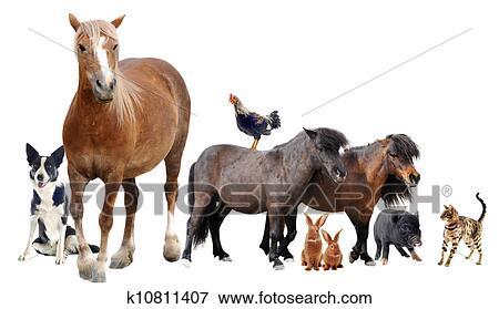 Immagine animali fattoria k10811407 cerca archivi for Stampe di fattoria gratis