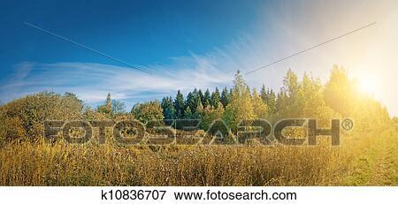 森林, panorama., 夏天, 早晨, 背景图片