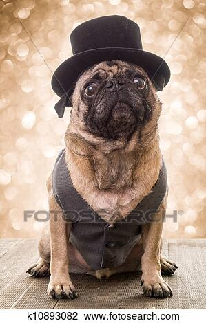 Stock photo new years eve dog fotosearch search stock photography
