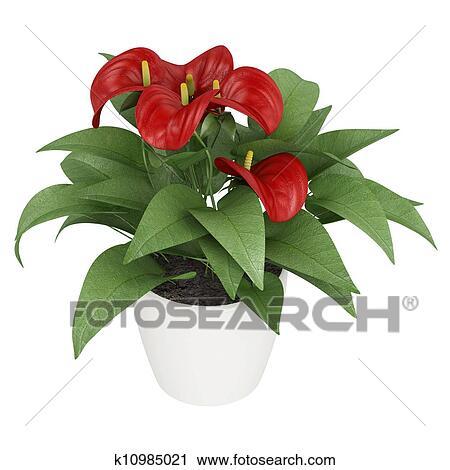 Clipart rosso anthurium fiori k10985021 cerca for Anthurium rosso