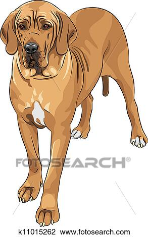 Clipart of vector sketch domestic dog fawn Great Dane breed ...