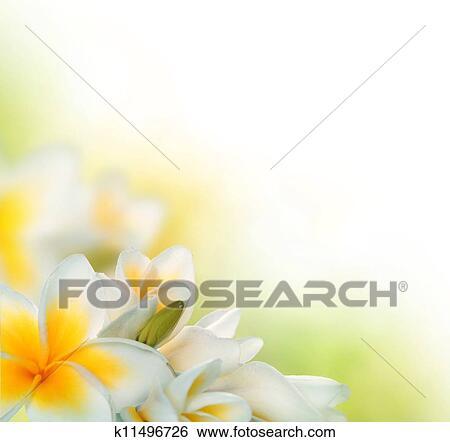 Plumeria Border Stock Images - Image: 16470634