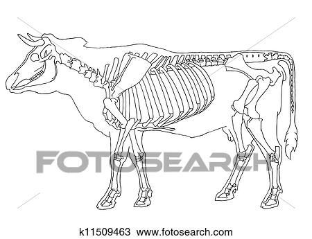 clipart of cow skeleton k11509463