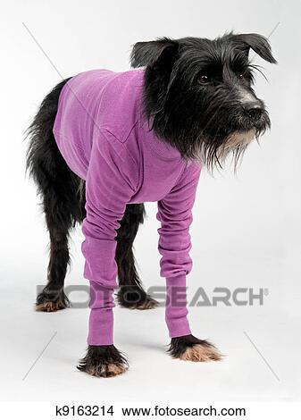 Big Dog Wearing Sweater Funny dog wearing sweater