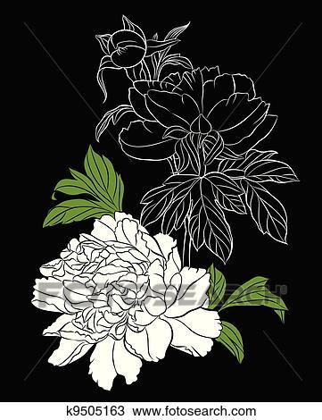 剪贴画 - 怀特, 牡丹, 在上, 黑色的背景图片