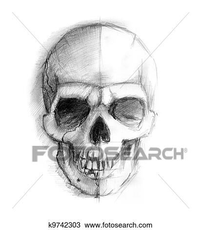 drawing drawing human skull fotosearch search clipart illustration fine art prints