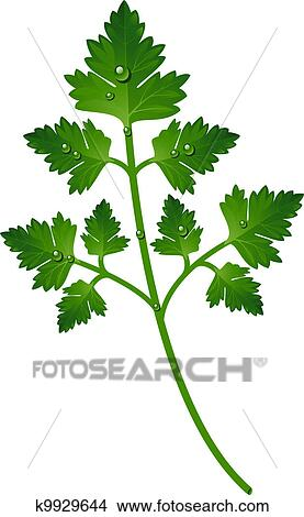 Clipart of Branch of parsley k9929644 - Search Clip Art, Illustration Murals, Drawings ...