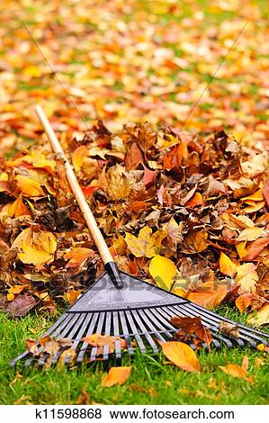Picture - Fall leaves with rake. Fotosearch - Search Stock Photos, Images, Print Photographs, and Photo Clip Art