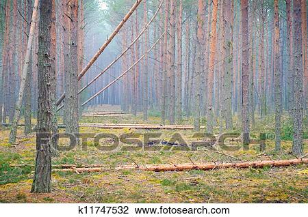 Stock Photo of Rainforest deforestation in Ukraine ...