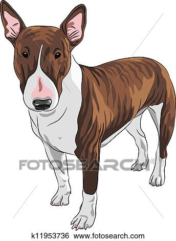Clip Art Of Vector Cartoon Bull Terrier Dog Breed In Black And Tan - Bull terrier art