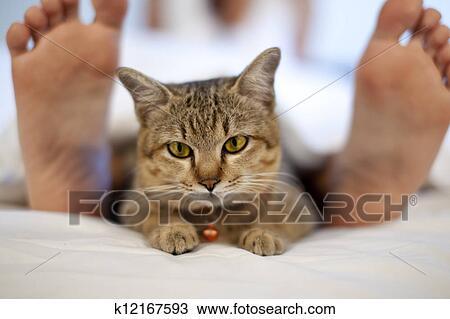 Singel kvinne og katt