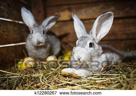 image jeune lapins dans a clapier k12280267. Black Bedroom Furniture Sets. Home Design Ideas