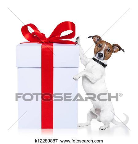 bild weihnachten hund mit geschenk k12289887 suche. Black Bedroom Furniture Sets. Home Design Ideas