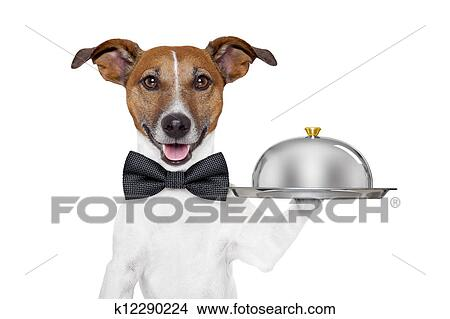 banque de photo chien service plateau k12290224 recherchez des images des photographies. Black Bedroom Furniture Sets. Home Design Ideas