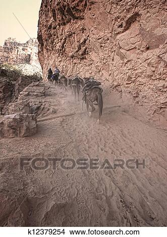 Stock Photo of Mule Train in the Desert k12379254 - Search ...