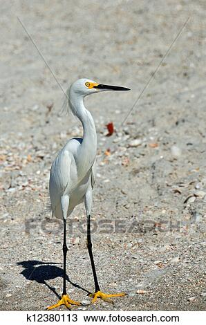 Stock Photo of White crane k12380113 - Search Stock Images ...