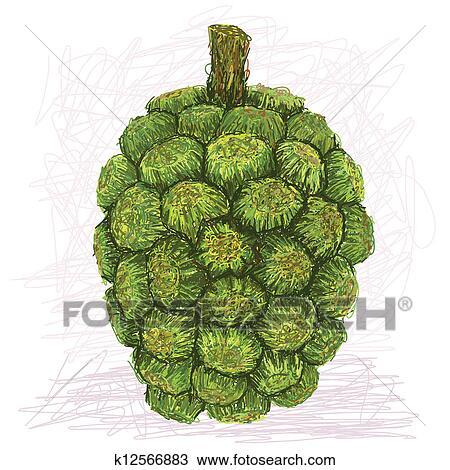 手绘图 - 露兜树, 水果