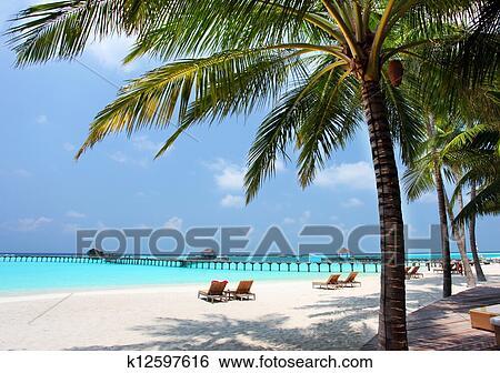 Archivio di immagini panorama di spiaggia tropicale for Disegni di casa sulla spiaggia tropicale