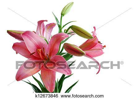 图片银行 - 百合花, 花束
