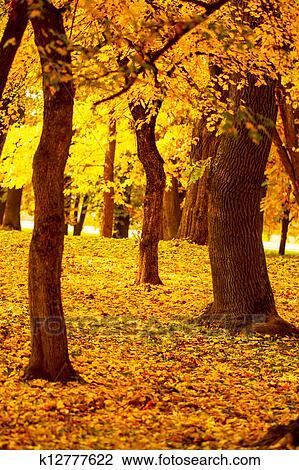 Banco de Imagem - paisagens outono. Fotosearch - Busca de Fotografias, Impressões, Imagens, e Fotos Clip Art