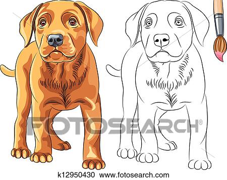 Clipart of Vector Coloring Book of red Puppy dog Labrador ...