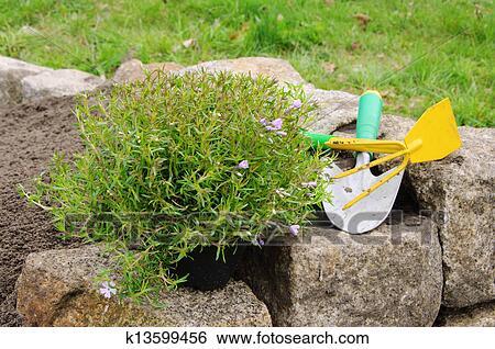 灌木种植施工方案