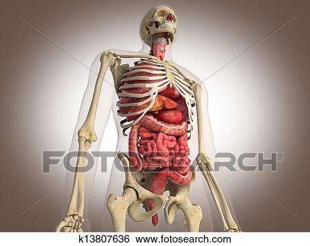 写真素材・動画素材・イラスト素材イラスト - 3d, レンダリング, 腸, 内部 器官