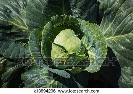 ehdwalls fresco verde - photo #20