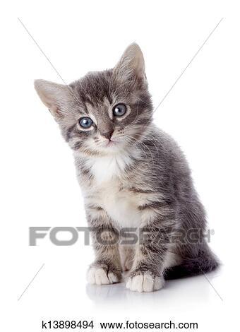 Stock foto dass grau gestreift katzenbaby sitzt auf a wei hintergrund k13898494 - Wandbilder grau weiss ...