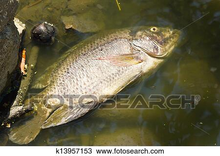 Stock Photo Of Dead Fish In The Waste Lake Of Urban Park
