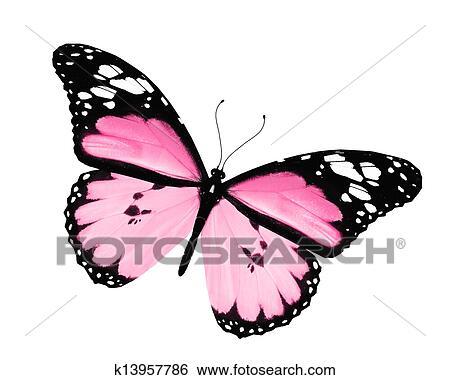 http://fscomps.fotosearch.com/compc/CSP/CSP992/k13957786.jpg Pink Butterfly Graphics
