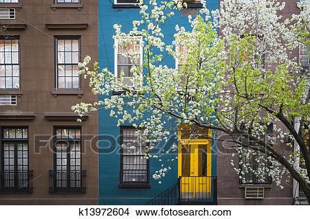 Archivio fotografico fioritura albero edificio di for Appartamenti ny manhattan