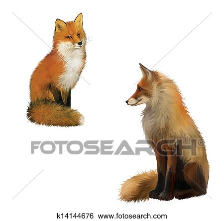 Sitting fox illustration - photo#15