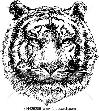 clip art tiger kopf hand gezeichnet k14429206 suche clipart poster illustrationen. Black Bedroom Furniture Sets. Home Design Ideas